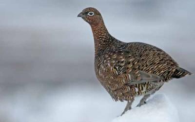 Glenfiddich Snow Phoenix kaufen
