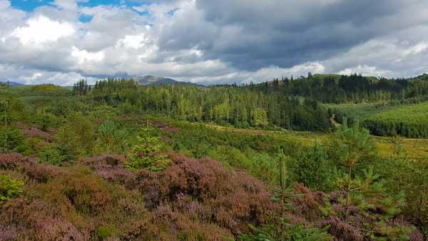 """Wildes Schottland: Unterwegs im Aberfoyle Forestpark, dem """"Tor zu den Highlands"""""""