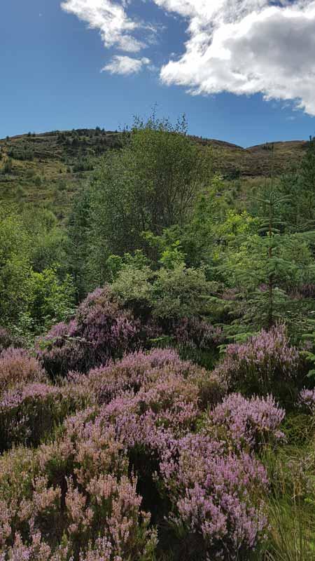 Die Whiskyregion Highlands ist geprägt von Bergen, Flüssen, Seen und Heidekraut.