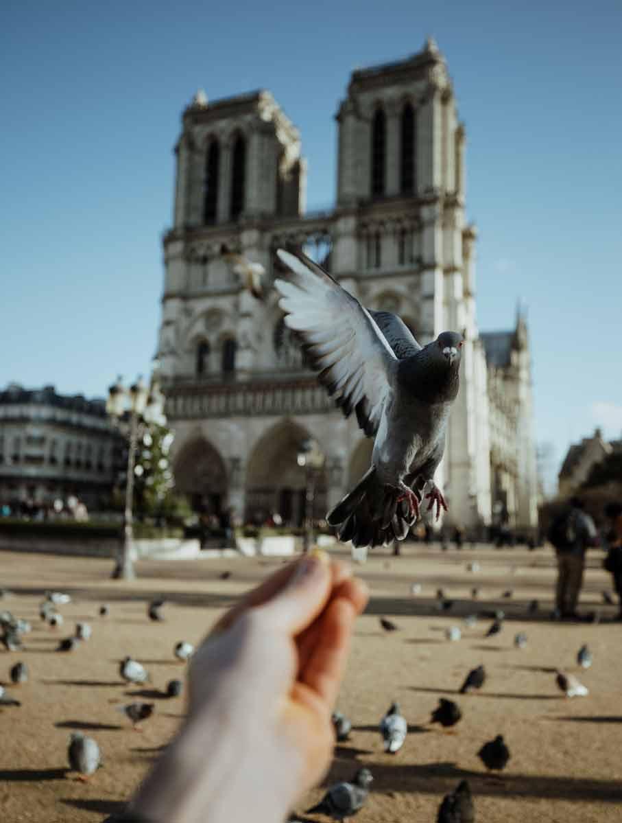 Hoffnung für die Kathedrale Notre Dame in Paris. LVMH spendet 100 Millionen für den Wiederaufbau