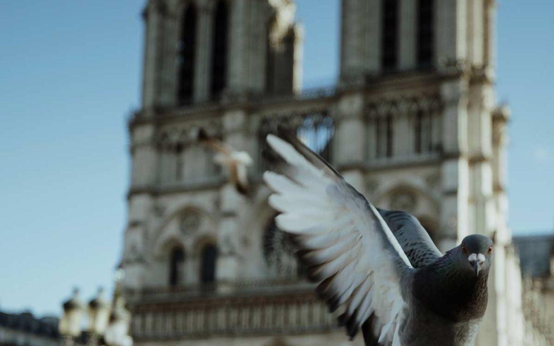 Brandkatastrophe Notre-Dame: 200 Millionen € vom Diageo-Eigner LVMH